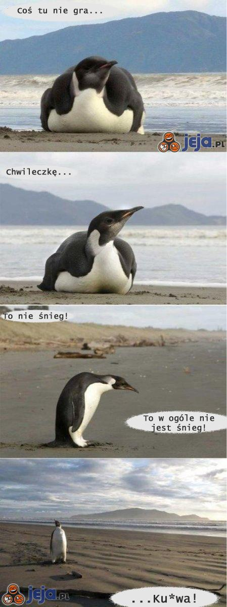Zdezorientowany pingwin