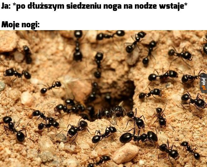 Tylko nie mrówki!