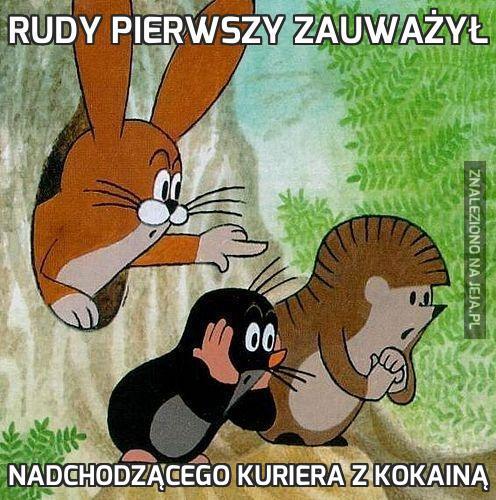 Rudy pierwszy zauważył