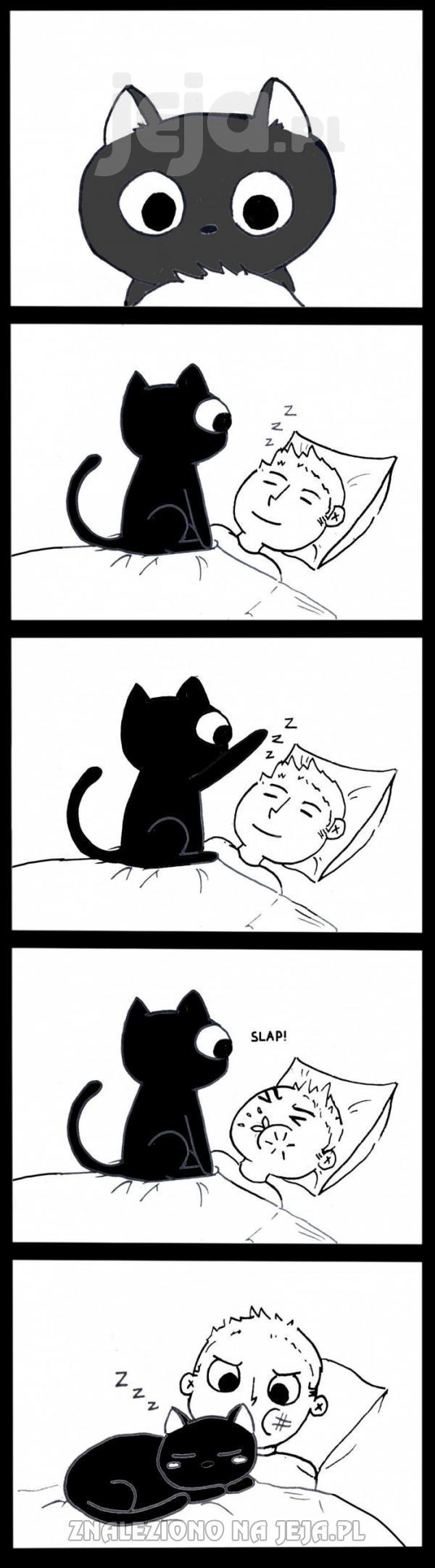 Dlaczego koty lubią nas budzić?