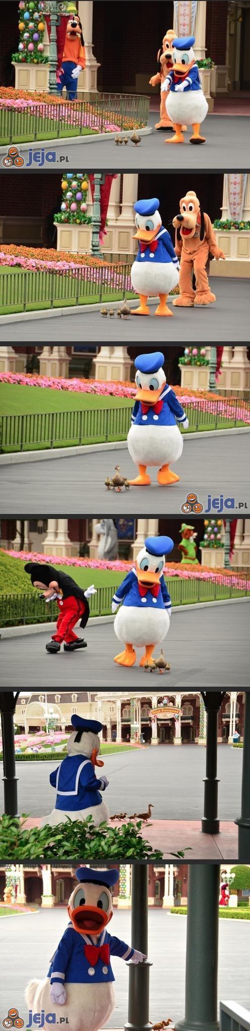 Donald znalazł kolegów