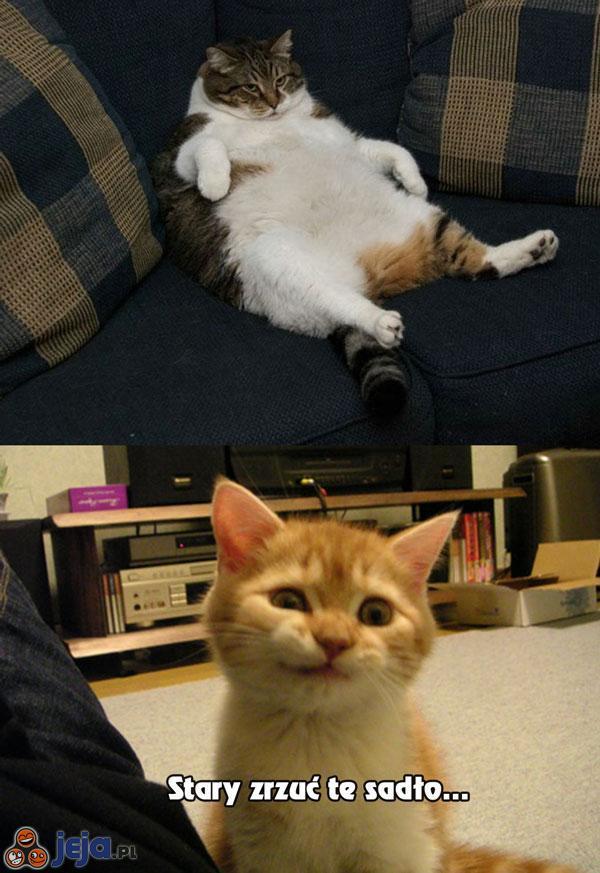 Zniesmaczony kotek