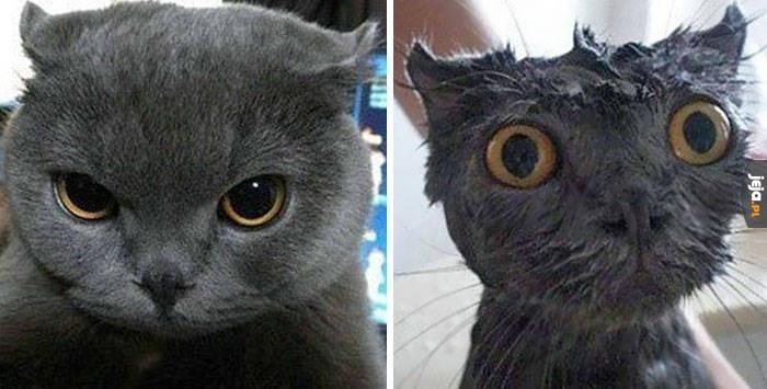 Kot po kąpieli