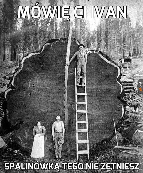 Kawał drzewa