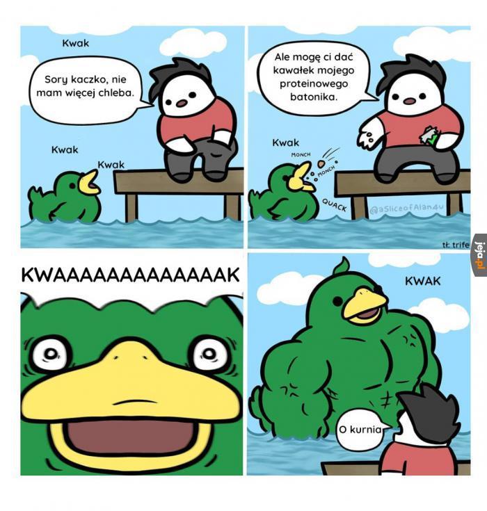 Potężna kaczka