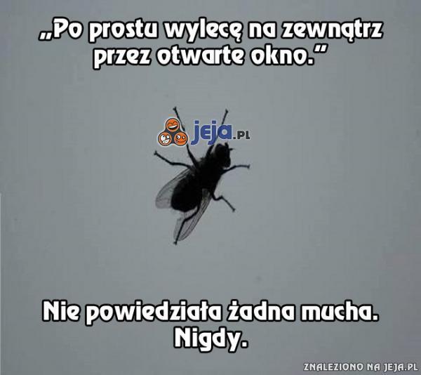 Czego nie mówią muchy