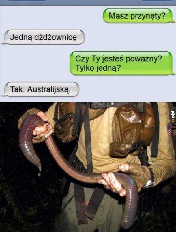 Australijska dżdżownica