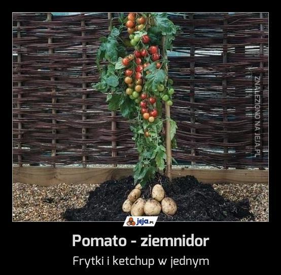 Pomato - ziemnidor