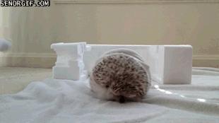 Zwierzęca wersja Wrecking Ball