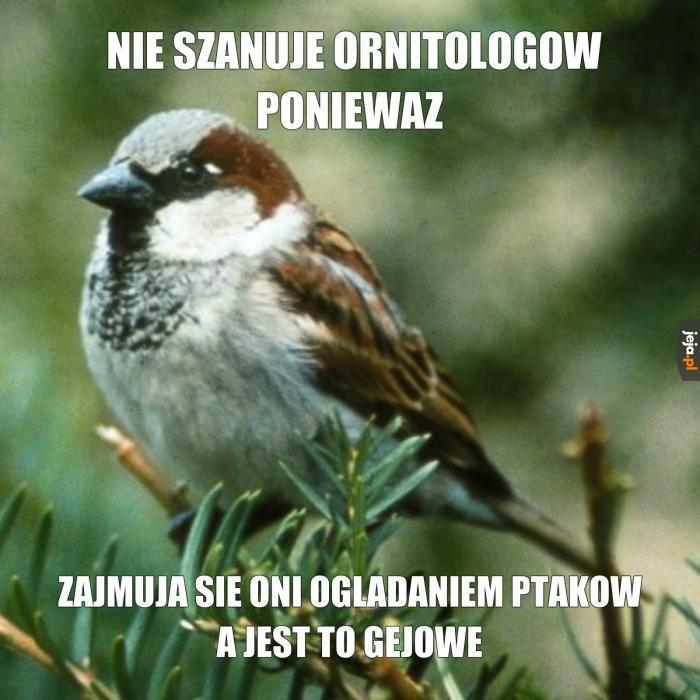 To właśnie przez ornitologów nie mam polskich znaków
