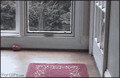 Kto powiedział, że to wejście dla kotów?