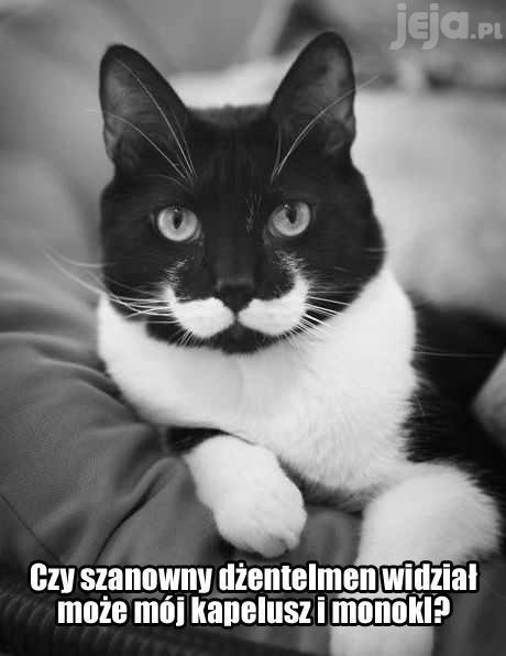 Kocie wąsy