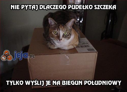 Nie pytaj dlaczego pudełko szczeka