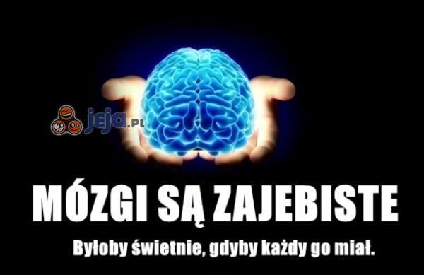 Mózgi są zajebiste