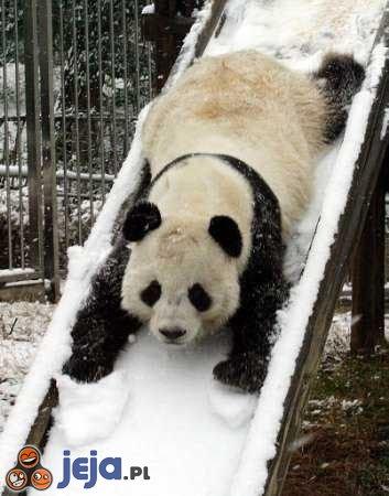 Zjazd pandy