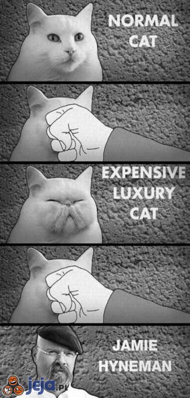 Od kota do człowieka