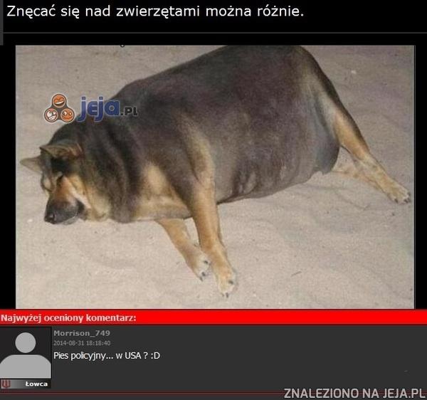 Nieco inny pies policyjny