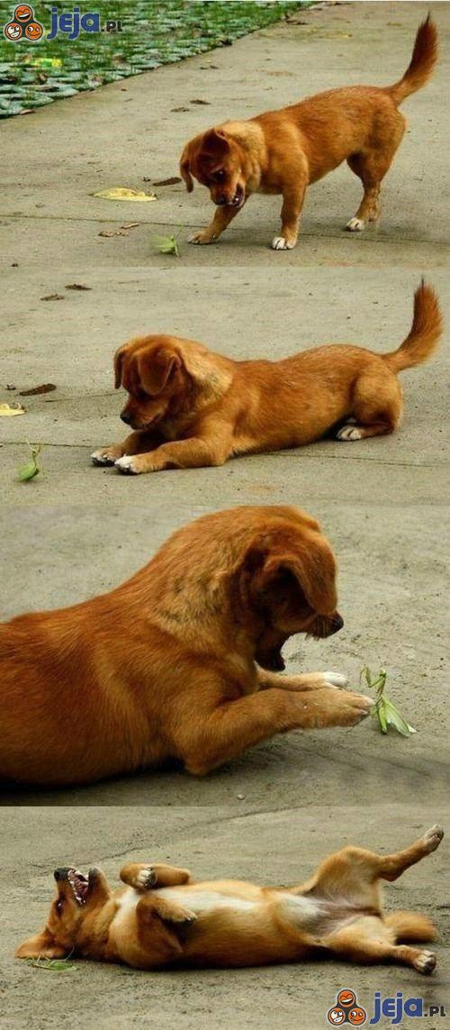 Po prostu pies i... modliszka