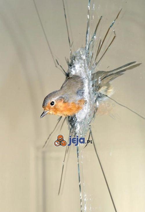 Przeciwpancerny ptak
