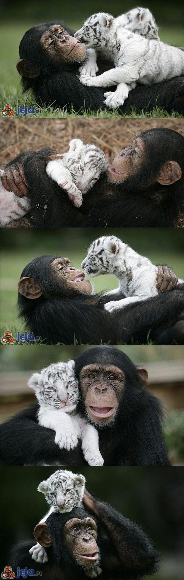 Przyjaźń dwóch osieroconych zwierzaków