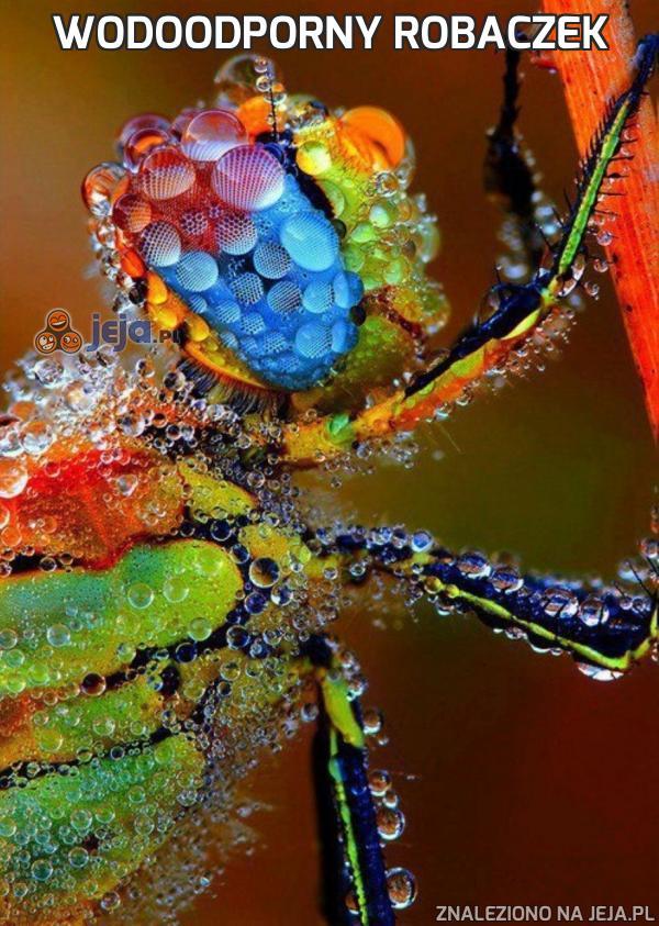 Wodoodporny robaczek