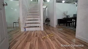 Zdechły pies!