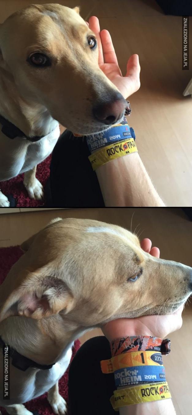 Z cyklu: Psie rozkminy o życiu i takich tam