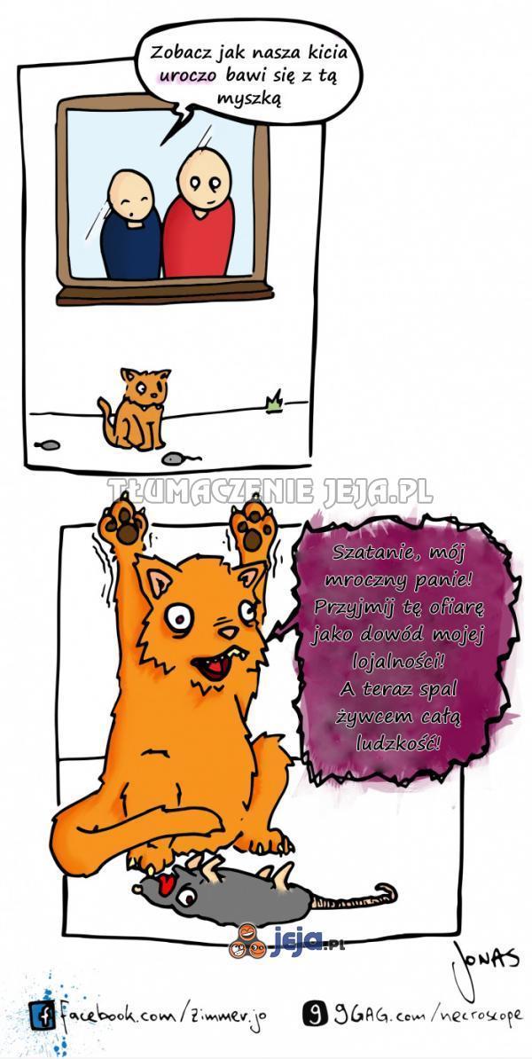 Niewinne kocie zabawy