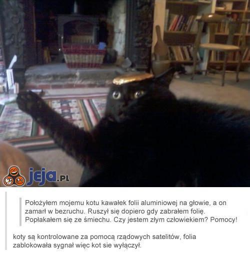 Wyłączony kot