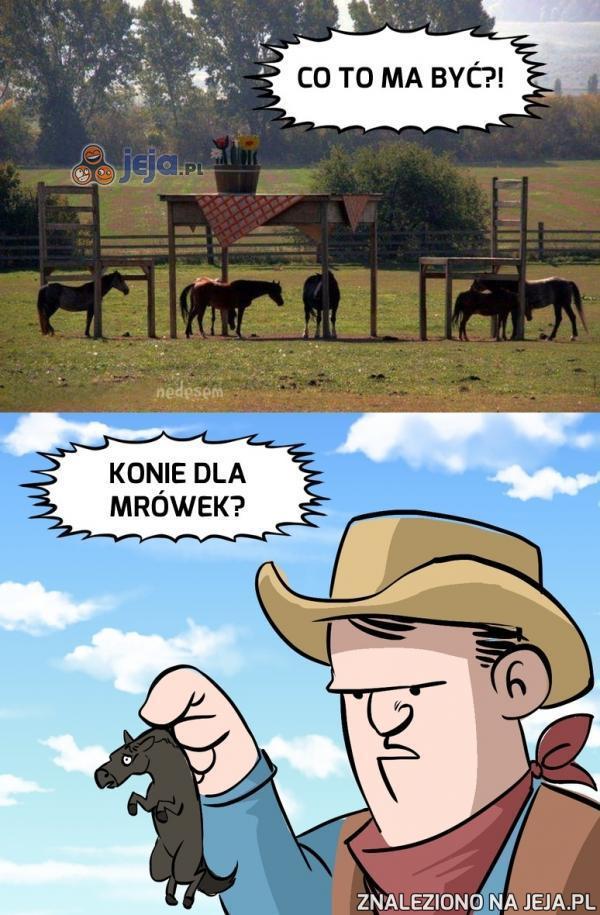 Chyba jakaś nowa rasa koni...