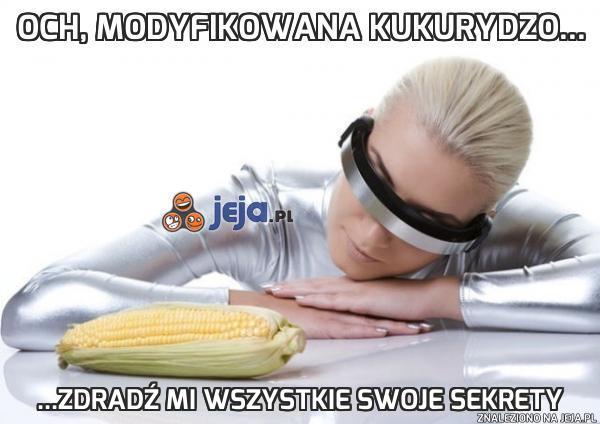Och, modyfikowana kukurydzo...