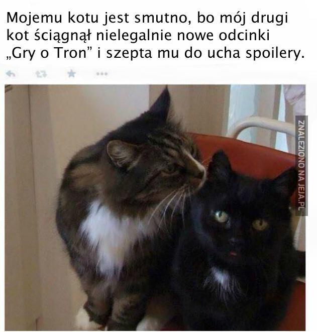 Koty to jednak dupki