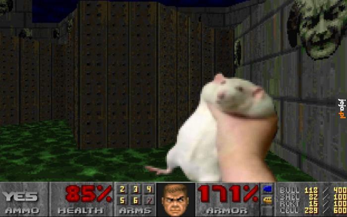 Wiecie co jest lepsze od jednego szczura?