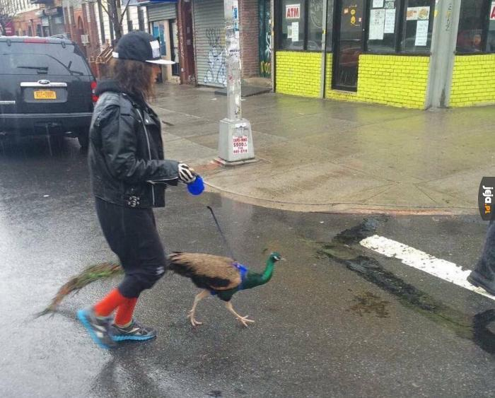 Dziwne ludzie mają zwierzęta...