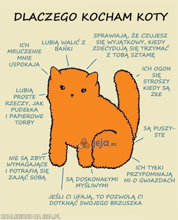 Dlaczego kocham koty