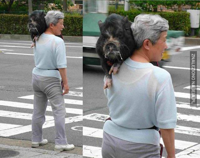 Kolejny zwyczajny dzień w Japonii...