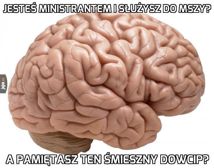 Stop, mózgu...