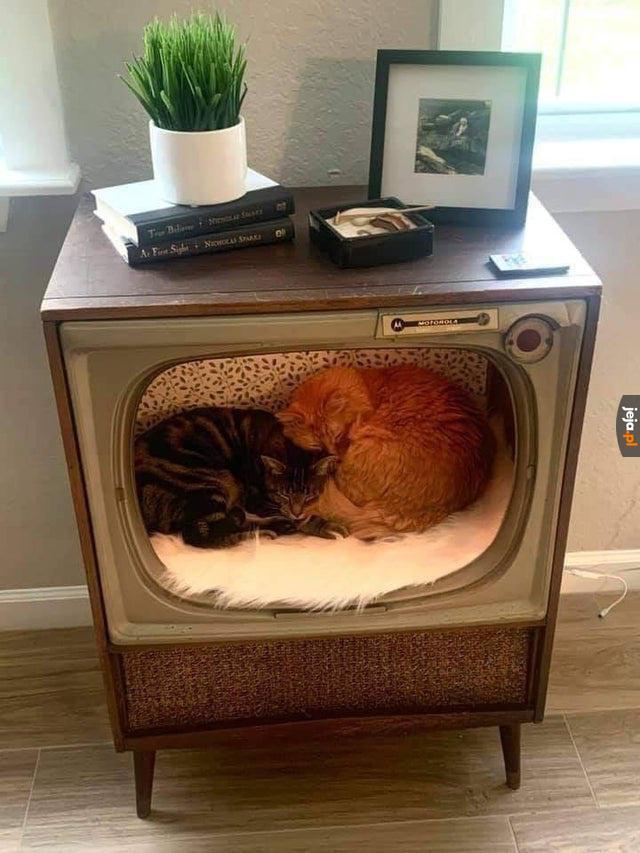 Ładne miejsce dla kotków
