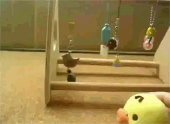 Papuga z poczuciem rytmu