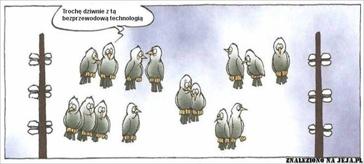 Nowoczesne gołębie