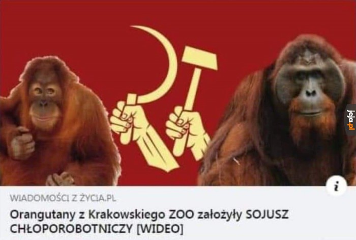 Małpy silne razem