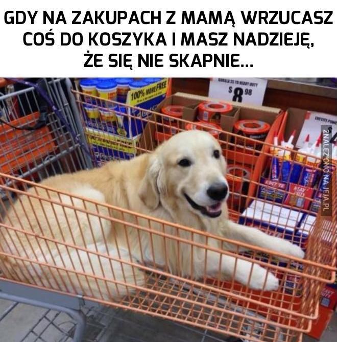 Pies? Jaki pies? Nie mam pojęcia o czym mówisz!