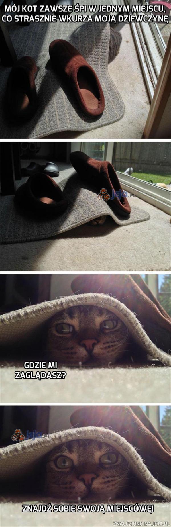 Dywanowy koteł