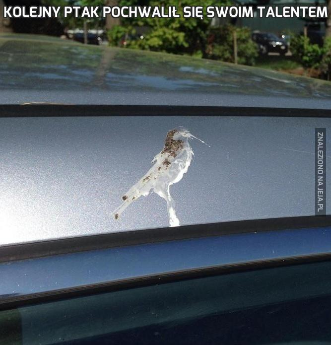 Kolejny ptak pochwalił się swoim talentem