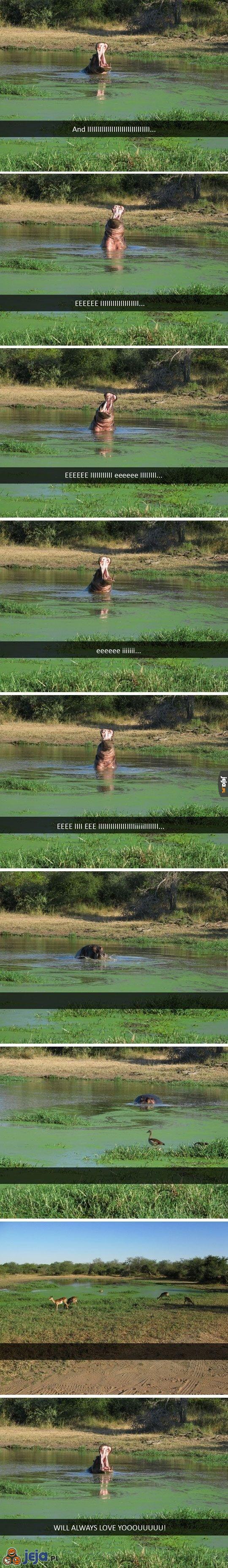 Piosenka hipopotamów