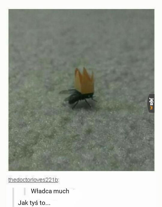 Władca much