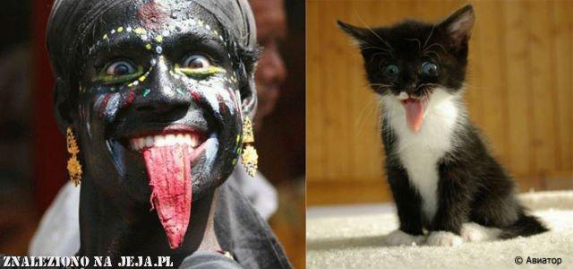Znajdź 5 różnic - kotek