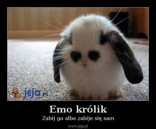 Emo królik