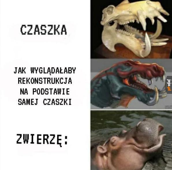 Z dinozaurami jest tak samo