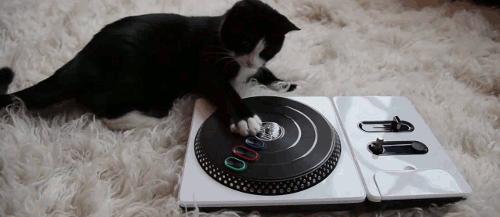 DJ kot